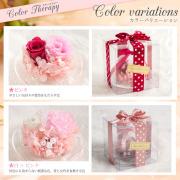 カラーバリエーション:ピンク・白×ピンク
